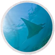 Group Of Manta Rays In Blue Water Round Beach Towel