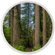 Group Of Redwoods Round Beach Towel