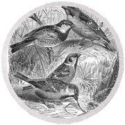 Group Of Sparrows Round Beach Towel