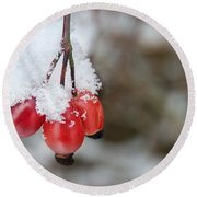 Guelder Rose In The Snow Round Beach Towel