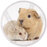 Guinea Pig And Hamster Round Beach Towel