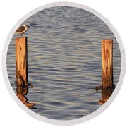 Gull At Sunset Round Beach Towel