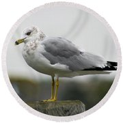 Gullwatch Round Beach Towel