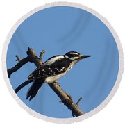 Hairy Woodpecker Round Beach Towel