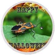 Halloween Greeting Card - Box Elder Bug Round Beach Towel