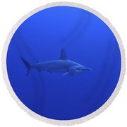 Hammerhead Shark, Christmas Island Round Beach Towel