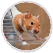 Hamster Round Beach Towel