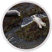 Harbor Seals Round Beach Towel