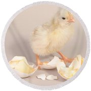 Hatching Chicken 20 Of 22 Round Beach Towel by Ted Kinsman