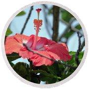 Hawaiian Hibiscus Round Beach Towel
