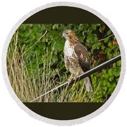 Hawk At A Wedding Round Beach Towel