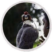 Hawk With Eyes Covered At A Show Inside The Jurong Bird Park In  Round Beach Towel