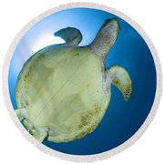 Hawksbill Sea Turtle Belly, Australia Round Beach Towel