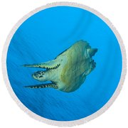 Hawksbill Turtle In The Diving Round Beach Towel