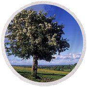 Hawthorn Tree On A Landscape, Ireland Round Beach Towel