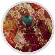 Head Detail Of A Red Dwarf Lionfish Round Beach Towel