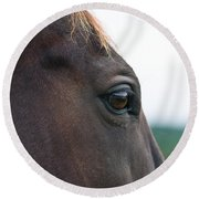 Head Of A Wild Horse In The Wilderness Round Beach Towel