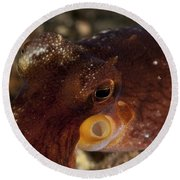 Head Shot Of A Brownish Red Coconut Round Beach Towel