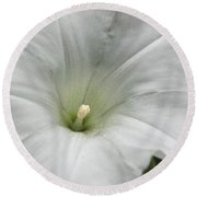 Hedge Morning Glory Round Beach Towel