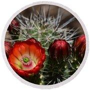 Hedgehog Cactus Flowers  Round Beach Towel