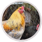 Hen Pecked Round Beach Towel