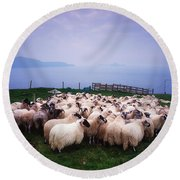 Herding Sheep, Inishtooskert, Blasket Round Beach Towel