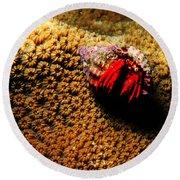 Hermit Crab On Coral Round Beach Towel