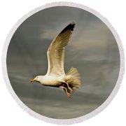 Herring Gull Larus Argentatus Round Beach Towel