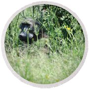 Hiding In Tall Grass Round Beach Towel
