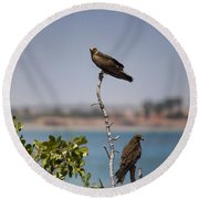 Higher Up The Tree Round Beach Towel
