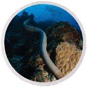 Highly Venomous Olive Sea Snake Round Beach Towel