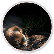 Hit The Otter Snooze Round Beach Towel