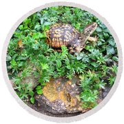 Hitchin A Ride On A Turtle  Round Beach Towel