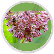 Honeybee On Milkweed Round Beach Towel