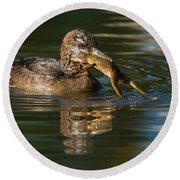Hooded Merganser And Bullfrog Round Beach Towel