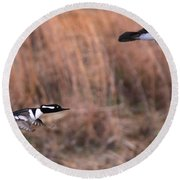 Hooded Merganser Gaining Altitude Round Beach Towel