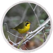 Hooded Warbler Round Beach Towel