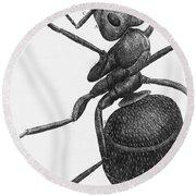 Hooke: Ant, 1665 Round Beach Towel