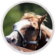 Horse At Mule Days 2012 - Benson Round Beach Towel