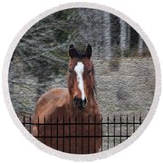 Horse Behind The Fence Round Beach Towel