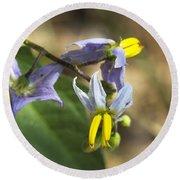 Horse Nettle Nightshade - Solanum Carolinense Round Beach Towel