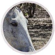 Horse With No Name V3 Round Beach Towel