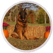 Hoss In Autumn II Round Beach Towel