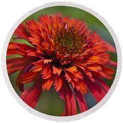 Hot Papaya Hybrid Coneflower Round Beach Towel