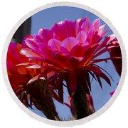 Hot Pink Cactus Flowers Round Beach Towel