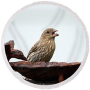 House Finch Eating Jelly Round Beach Towel