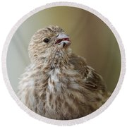 House Finch Profile Round Beach Towel
