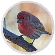 Housefinch IIi Round Beach Towel
