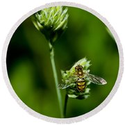 Hoverfly On Grass Round Beach Towel