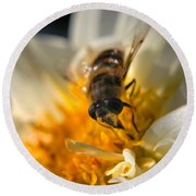 Hoverfly On White Flower Round Beach Towel